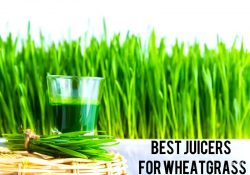 5 Best Wheatgrass Juicers To Buy In 2021