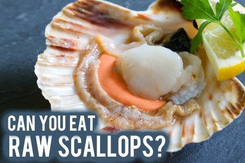 Can you eat raw scallops