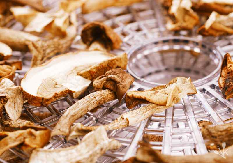 dehydrating mushrooms safely