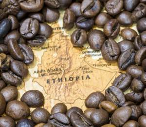 Ethiopia coffee regions