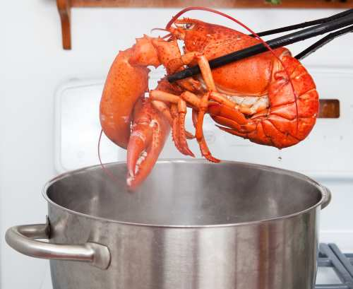 how to boil lobster
