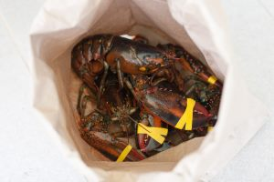 lobster shipping