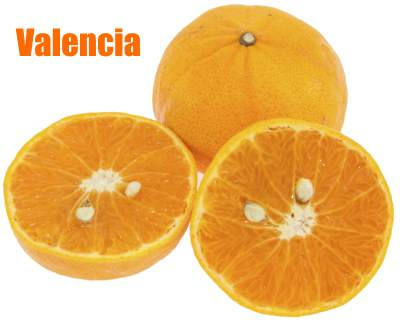 Valencia Orange With Seeds