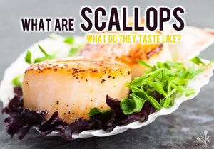 What Are Scallops & What Do Scallops Taste Like?