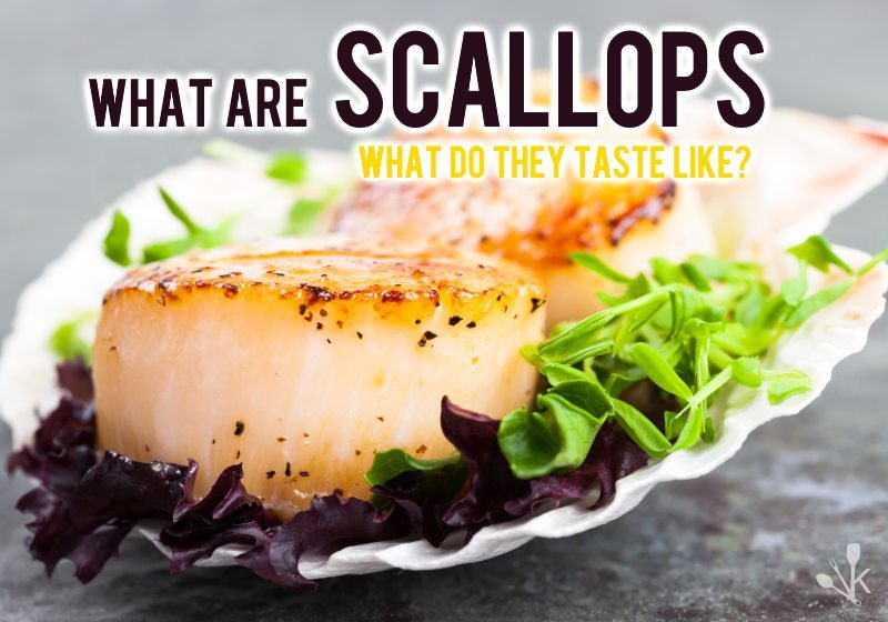 What Are Scallops