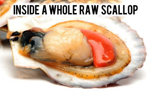 what does a scallop look like